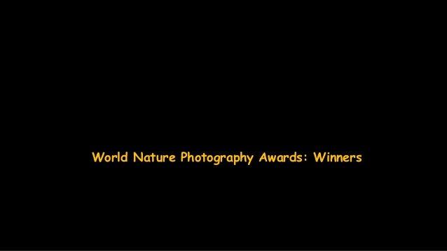 World Nature Photography Awards: Winners Slide 2