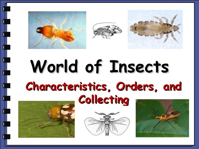 World of InsectsCharacteristics, Orders, and         Collecting