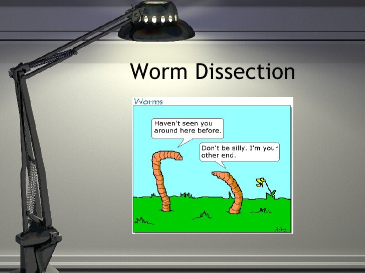 Worm Dissection