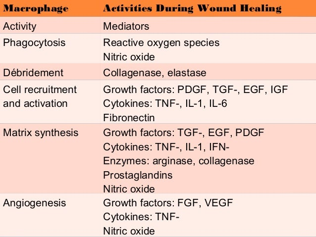 wound healing and the role of fibroblasts pdf