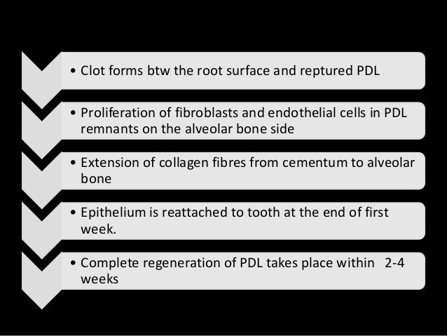 Characterisation Of The Alveolar Epithelial Wound Repair Manual Guide
