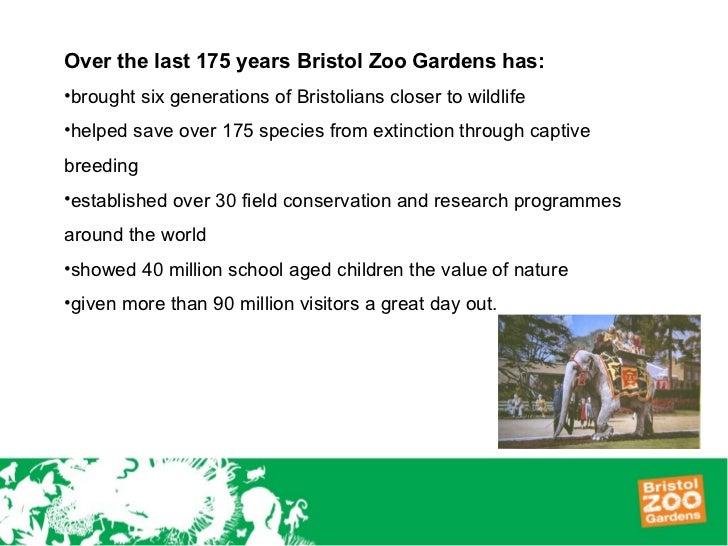 Bristol Zoos 175th Anniversary Wow Gorillas Campaign
