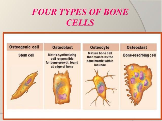 Bone : Basics