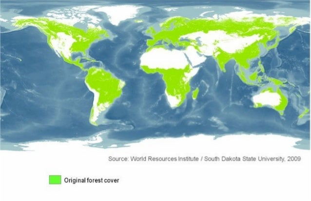 WRI (low res.map)- Global Forest Cover Map