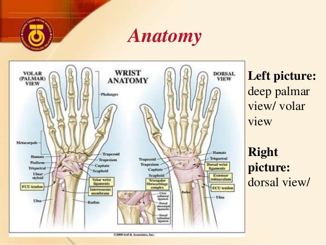 Sport Injuries - Wrist and Fingers Injuries