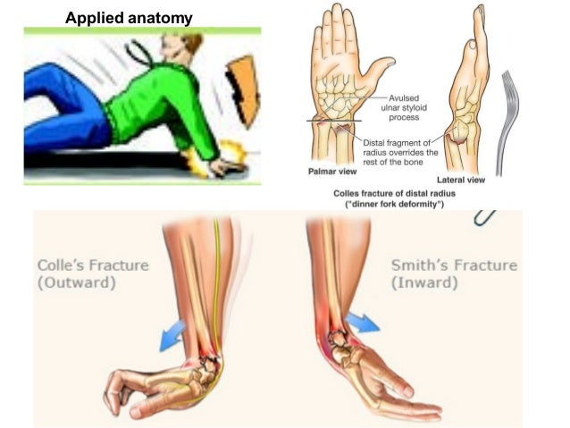 Radio-ulnar and Wrist joints