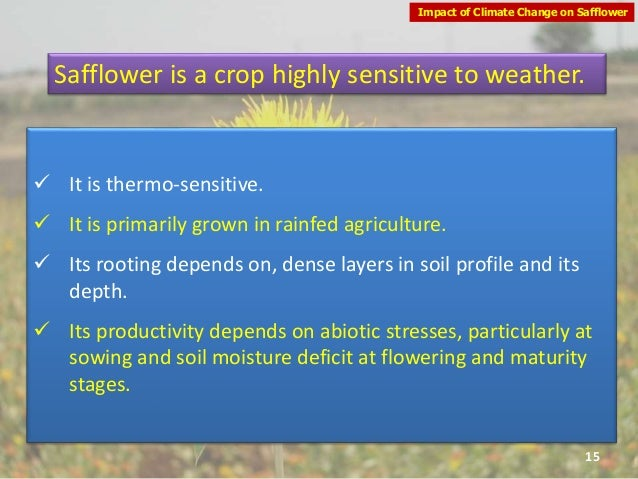 safflower research papers International journal of agronomy and agricultural research (ijaar) research paper open access seedling parameters as affected by seed priming of some safflower cultivars under salinity stress a a kandil1, a e sharief1, manal f kasim2 1department of agronomy, mansoura university.