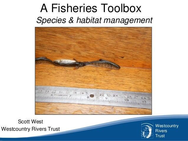 Westcountry Rivers Trust A Fisheries Toolbox Species & habitat management Scott West Westcountry Rivers Trust
