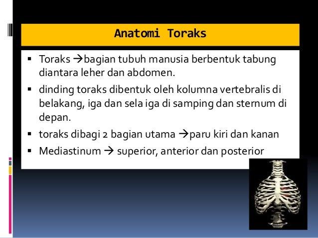 Anatomi Toraks  Toraks bagian tubuh manusia berbentuk tabung diantara leher dan abdomen.  dinding toraks dibentuk oleh ...