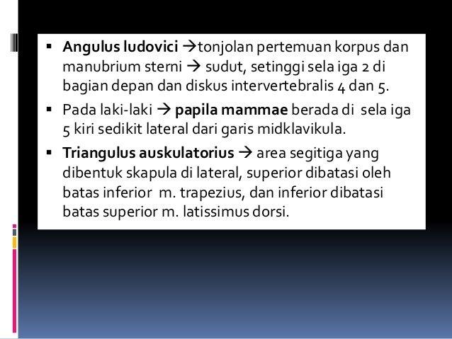  Angulus ludovici tonjolan pertemuan korpus dan manubrium sterni  sudut, setinggi sela iga 2 di bagian depan dan diskus...