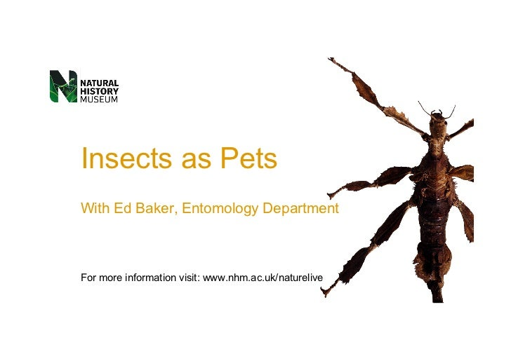 Insects as PetsWith Ed Baker, Entomology DepartmentFor more information visit: www.nhm.ac.uk/naturelive