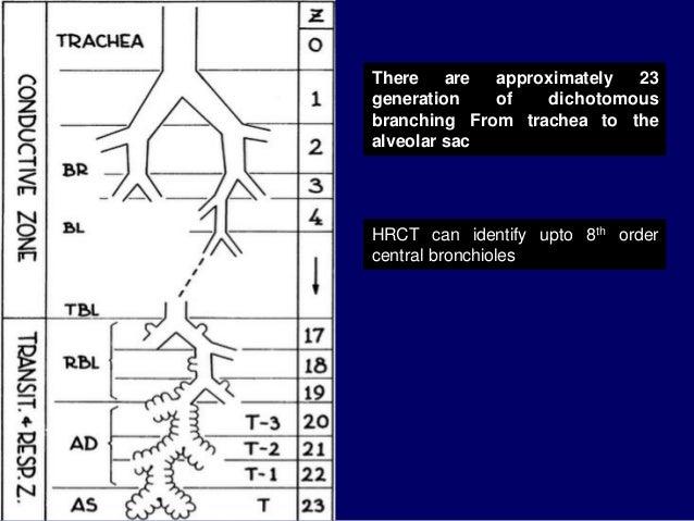 Segmental anatomy of lung