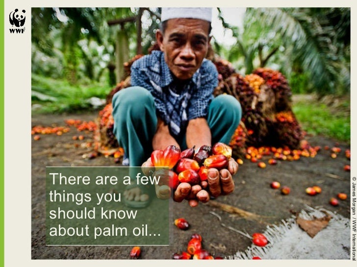 There are a few things you should know about palm oil... © James Morgan  / WWF International