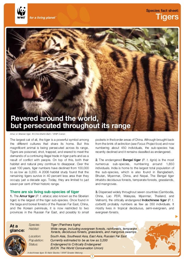 Species fact sheet: Tigers 1  Indochinese tiger. © Kabir Backie / WWF Greater Mekong At a   glance:  Species:   Tiger (Pan...