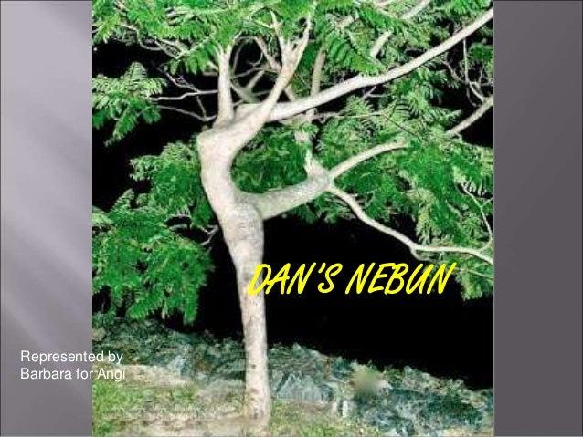 DAN'S NEBUN  Represented by  Barbara for Angi