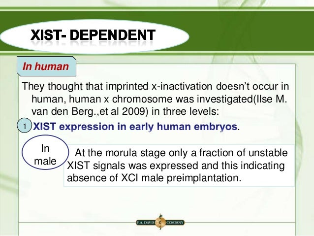 X Inactivation Mammals X inactivation in mamm...