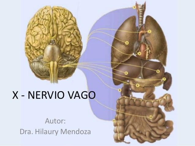 X - NERVIO VAGO Autor: Dra. Hilaury Mendoza