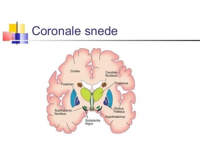 Neuroanatomie 1