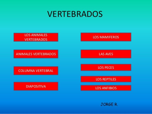 VERTEBRADOS  LOS ANIMALES  VERTEBRADOS  ANIMALES VERTEBRADOS  JORGE R.  COLUMNA VERTEBRAL  DIAPOSITIVA  LOS MAMIFEROS  LAS...