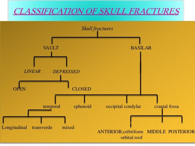 Anatomy Of Skull Fractures