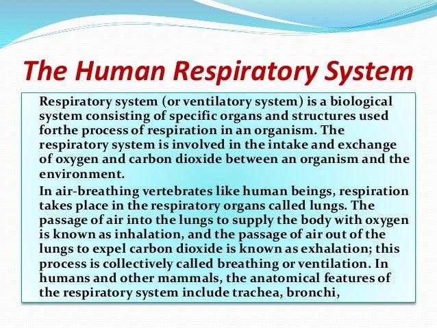 Respiratoryanatomy Power Point: The Human Respiratory System Ppt.1pptx