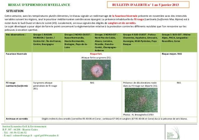 RESEAU D'EPIDEMIO-SURVEILLANCE BULLETIN D'ALERTE n° 1 au 5 janvier 2013 Institut Ecoumène Golf & Environnement B.P. 307 - ...