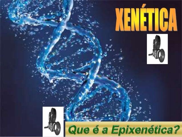 CONCEPTOS FUNDAMENTAIS DE XENÉTICA XENE: é a unidade básica de herdanza dos seres vivos. Dende o punto de vista molecular,...