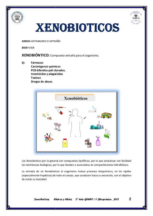 concepto de metabolismo anabolico