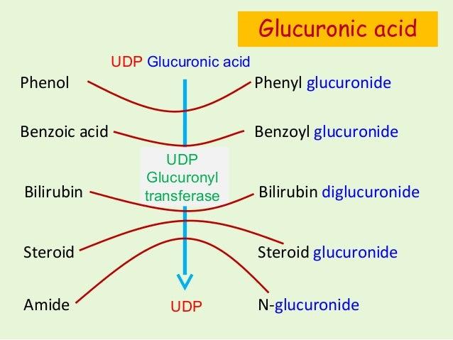 steroid like amino acid derived hormones