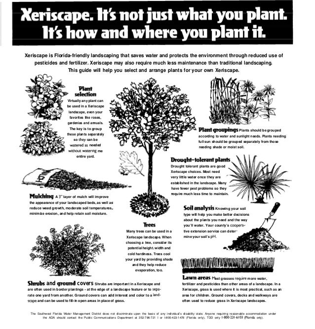 Xeriscape Basics How To Make Florida Friendly Landscaping Work For Y