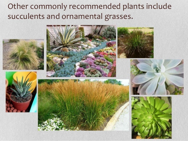Xeriscaping Drought Tolerant Landscaping
