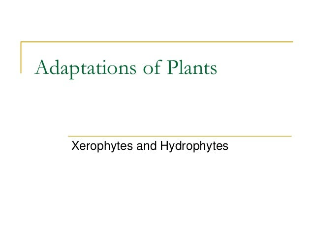 Adaptations of Plants    Xerophytes and Hydrophytes