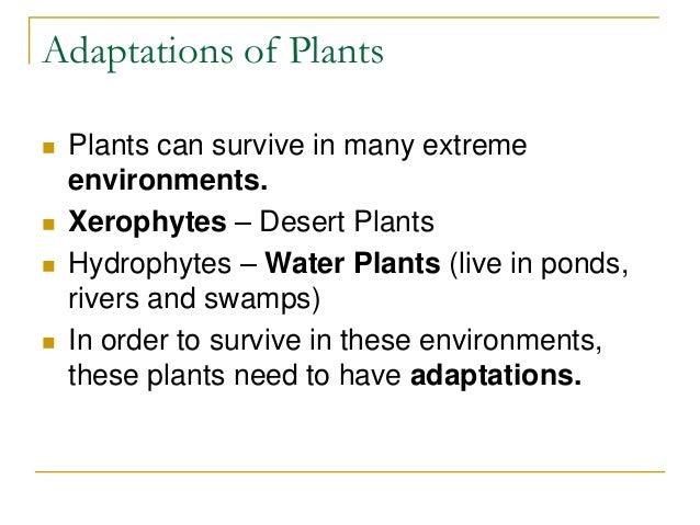 ecological adaptation of xerophytes