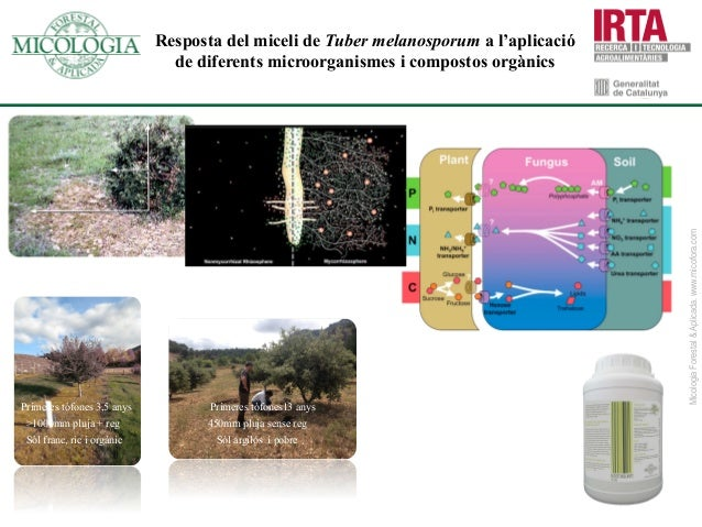 NuevaZelanda Suecia Finlandia China Nicaragua MicologiaForestal&Aplicada.www.micofora.com Siberia Chile Japón Guatemala Re...