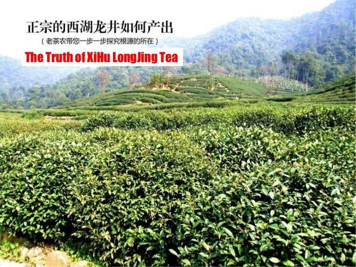 The Truth of XiHu LongJing Tea