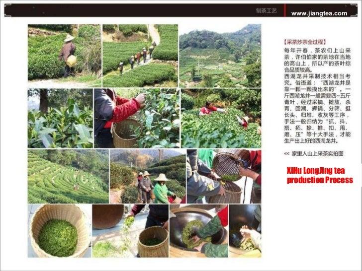 www.jiangtea.com XiHu LongJing tea production Process