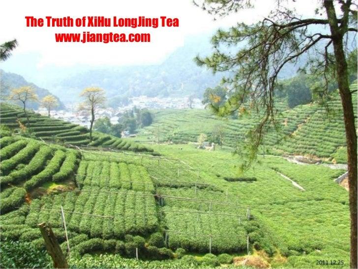 The Truth of XiHu LongJing Tea www.jiangtea.com