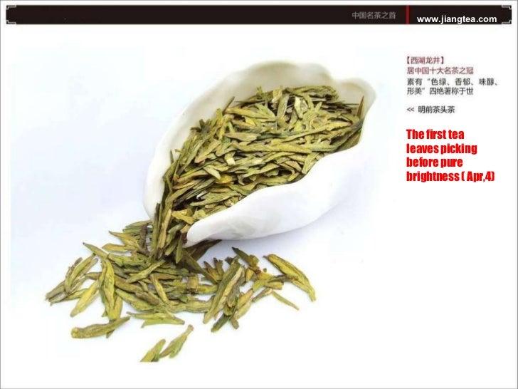Xihu longjing tea plantation Slide 3