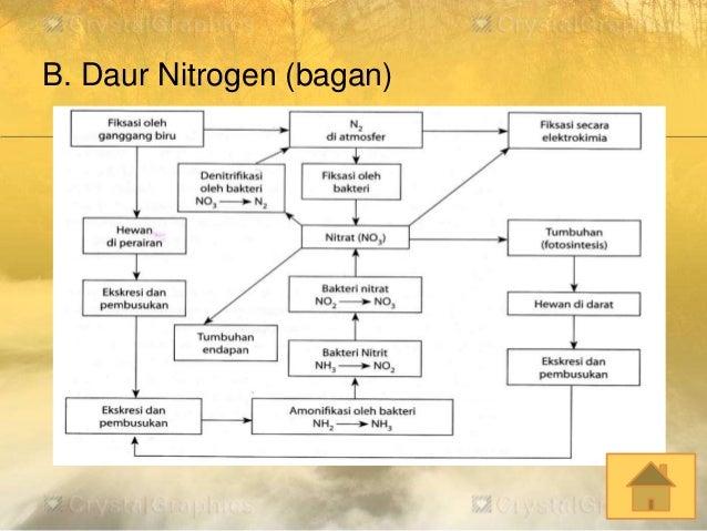 Ekosistem b daur nitrogen bagan ccuart Gallery