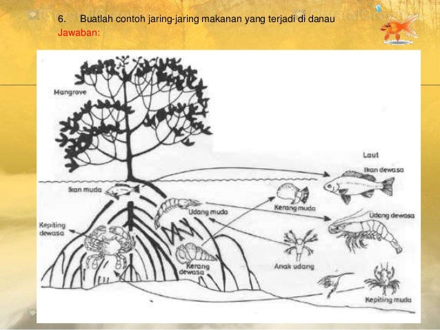 Ekosistem rantai makanan detritus serpihan daun sampah cacing tanah itik manusia 44 6 buatlah contoh jaring jaring ccuart Images