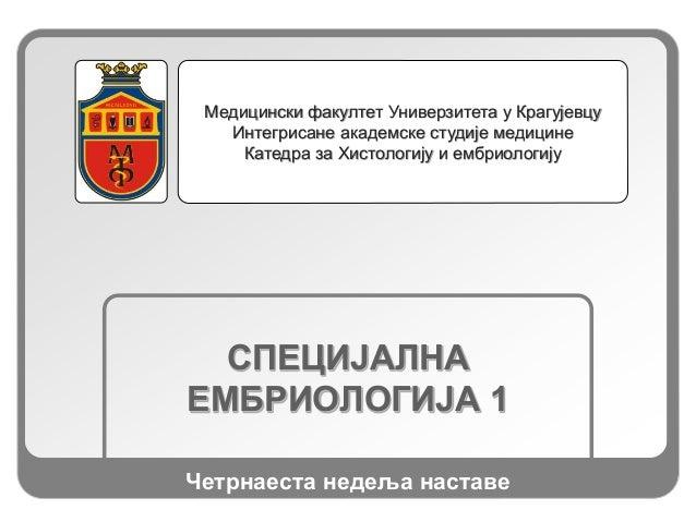 СПЕЦИЈАЛНА ЕМБРИОЛОГИЈА 1 Медицински факултет Универзитета у Крагујевцу Интегрисане академске студије медицине Катедра за ...