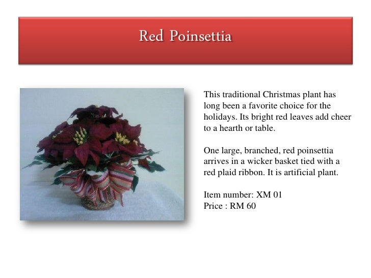 Red Poinsettia           This traditional Christmas plant has          long been a favorite choice for the          holida...