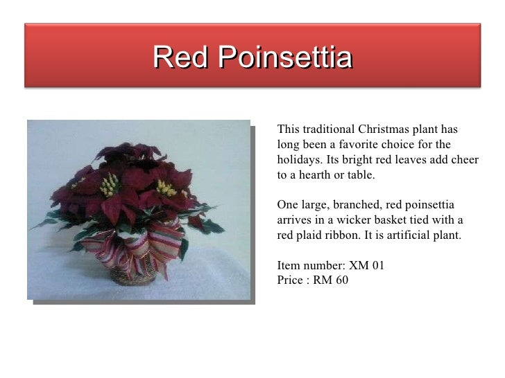 This traditional Christmas plant has long been a favorite choice for the holidays. Its bright red leaves add cheer to a he...