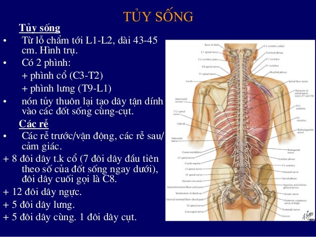 Xq benh cot song thuong gap Slide 3