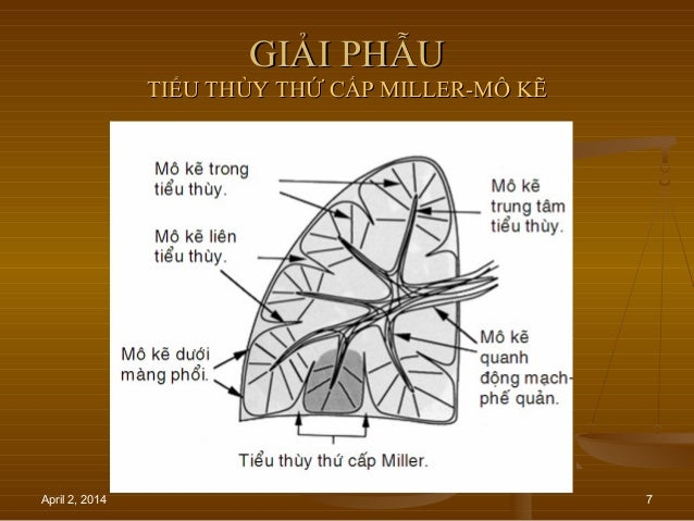 April 2, 2014 7 GIẢI PHẪUGIẢI PHẪU TIỂU THÙY THỨ CẤP MILLER-MÔ KẼTIỂU THÙY THỨ CẤP MILLER-MÔ KẼ