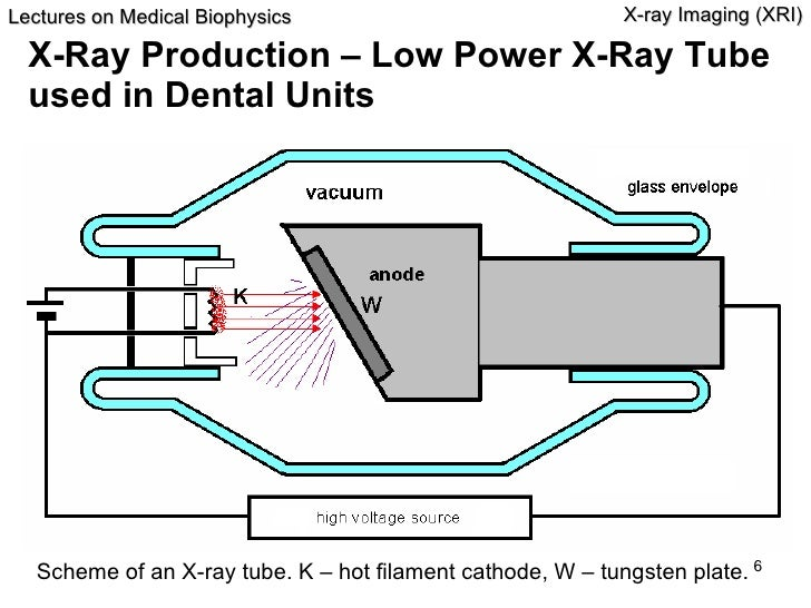 X Rays Production Animation Xri fin