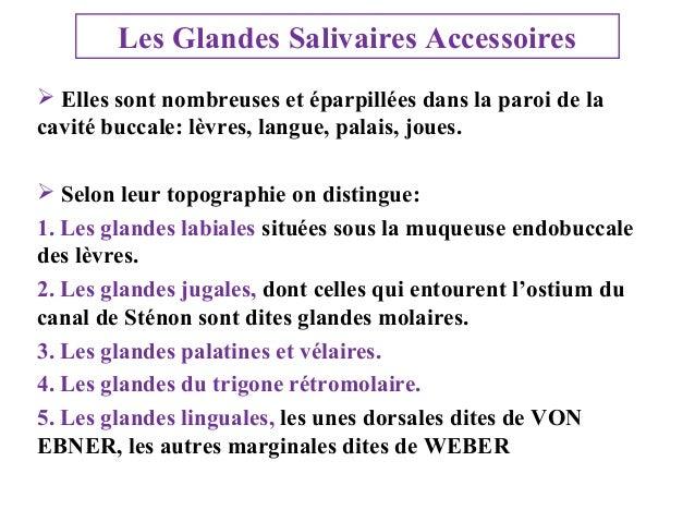 Les Glandes Salivaires Accessoires  Elles sont nombreuses et éparpillées dans la paroi de la cavité buccale: lèvres, lang...