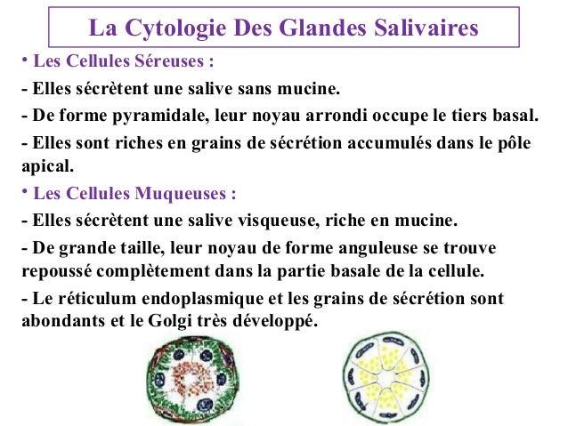 La Cytologie Des Glandes Salivaires • Les Cellules Séreuses : - Elles sécrètent une salive sans mucine. - De forme pyramid...