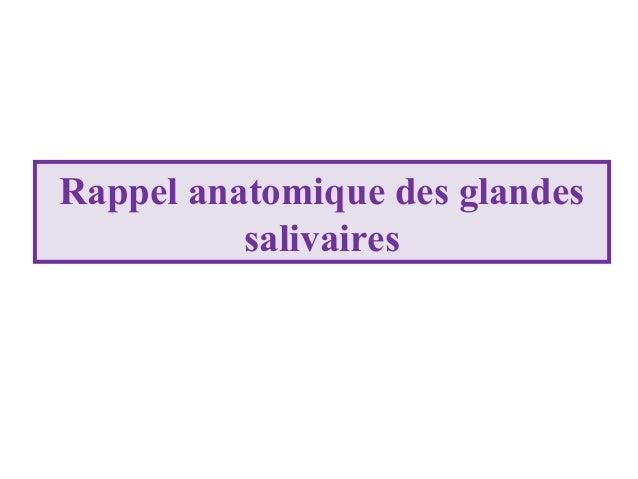 Rappel anatomique des glandes salivaires