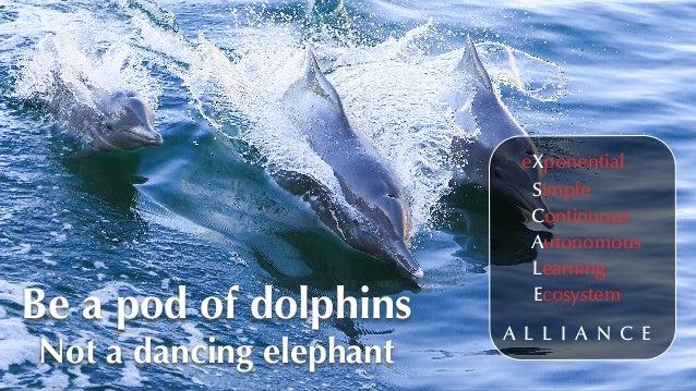 eXponential Simple Continuous Autonomous Learning Ecosystem A L L I A N C E Be a pod of dolphins Not a dancing elephant